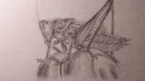 素描人物肖像 素描风景写生