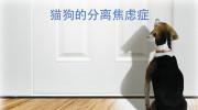 猫狗的分离焦虑症_20170105-動物行為治療師戴更基