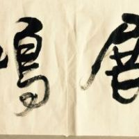杨照珺老师 大展宏图